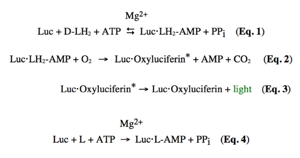 Chemistry Of Firefly Bioluminescence