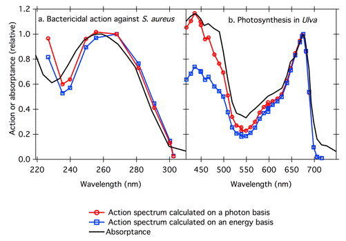 Figure 7 Action Spectra For A Bactericidal Of UV Radiation Against S Aureus Left And B Photosynthesis In The Green Alga Ulva