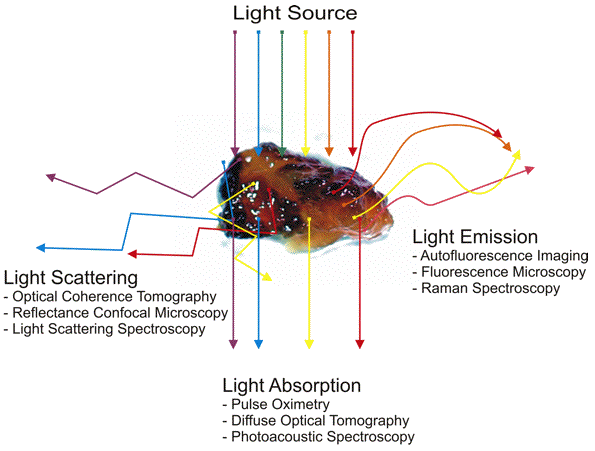 Schematic diagram of how scattered, absorbed, or re-emitted photons can be