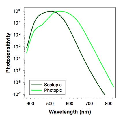 Adaptation Of Rod Photoreceptors To Light And Dark