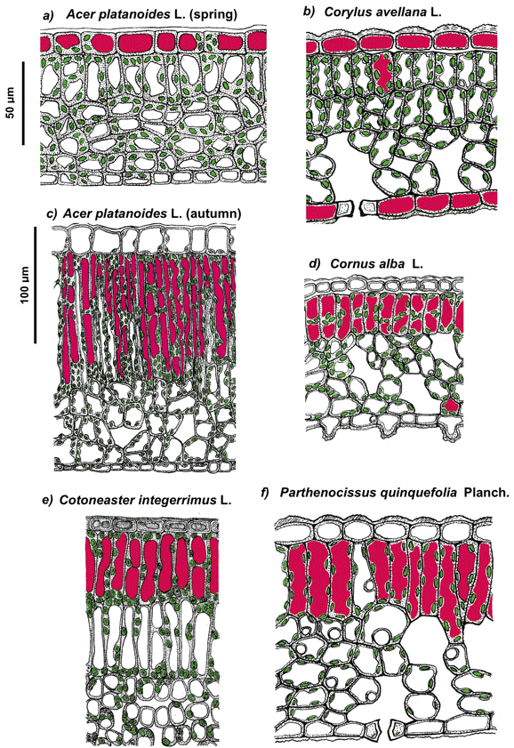 Photoprotection Of Plants Via Optical Screening
