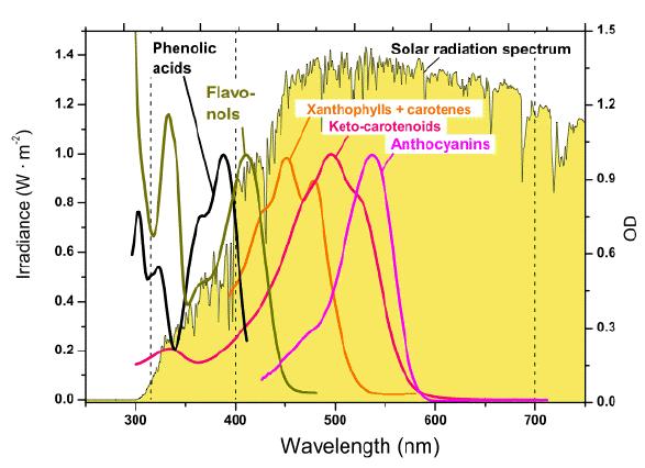 Absorption Spec... Xanthophyll Pigment