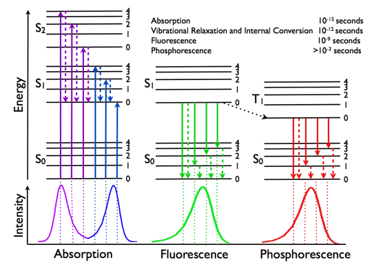 Basic photophysics jablonski diagram representing energy levels and spectra solid arrows indicate radiative transitions as occurring by absorption violet blue or emission ccuart Image collections